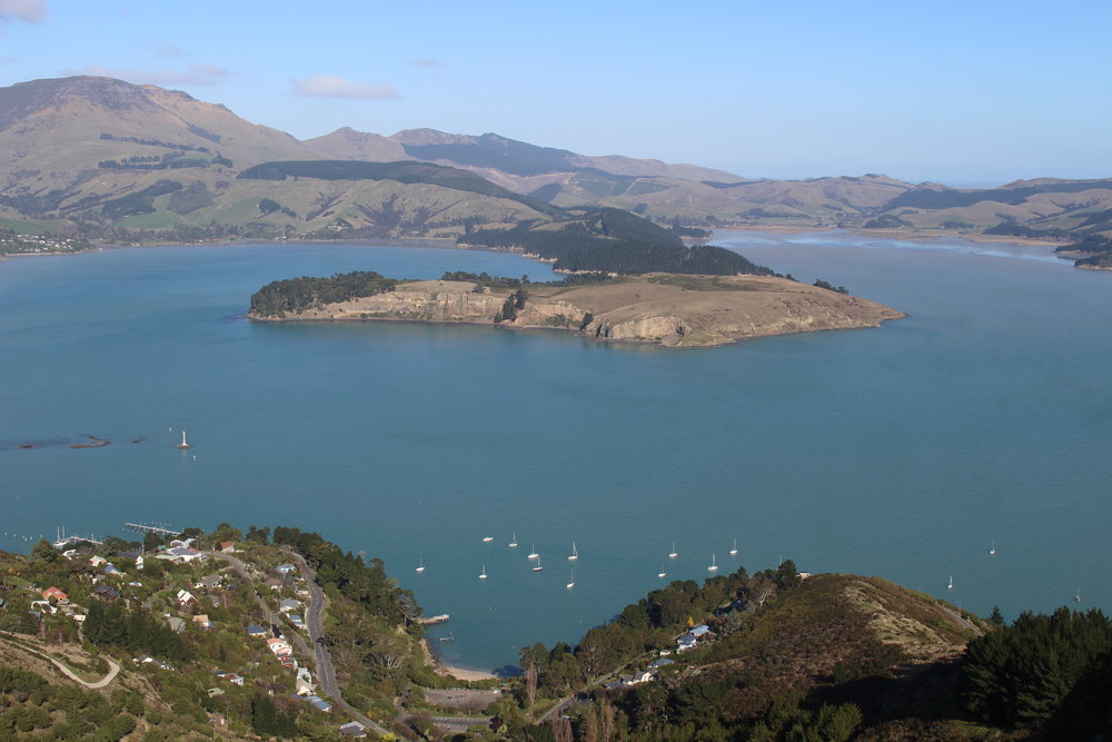 Quail Island viewed from above Corsair Bay, Lyttelton Harbour, Christchurch photo by Sunstone