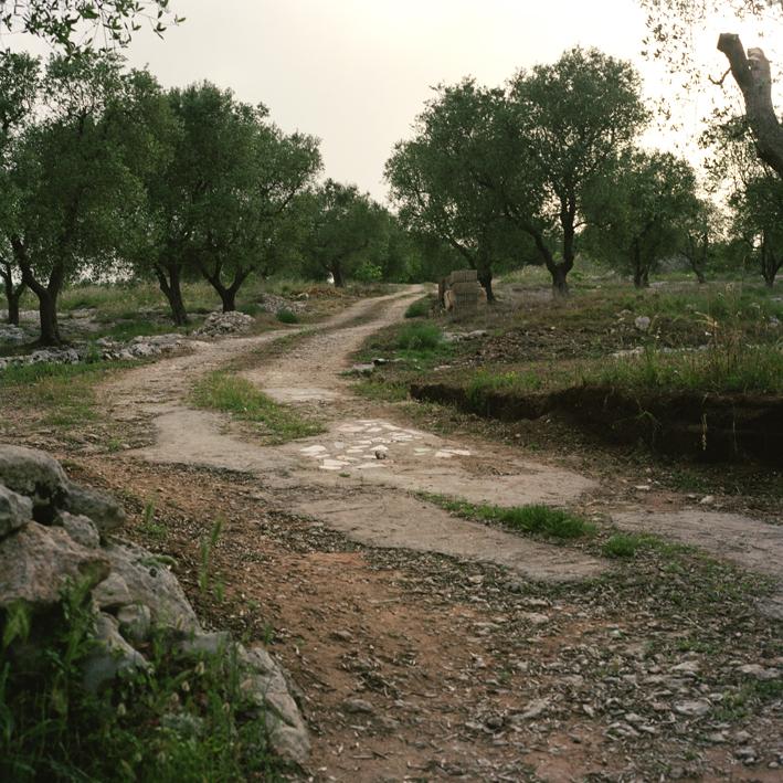 Road to Cursi #2, Salento, Apulia
