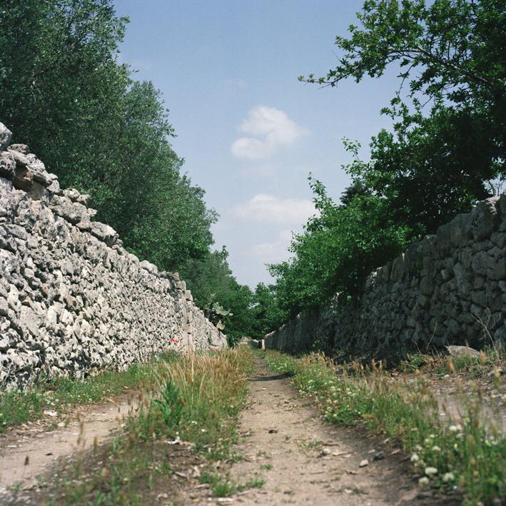 Road to Bagnolo, Salento, Apulia