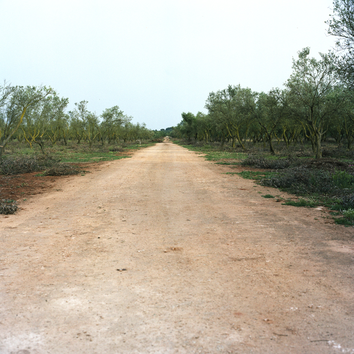 Road to Cannole, Salento, Apulia