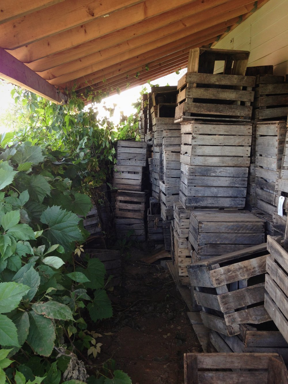 Weston's Antique Apple Orchard crates
