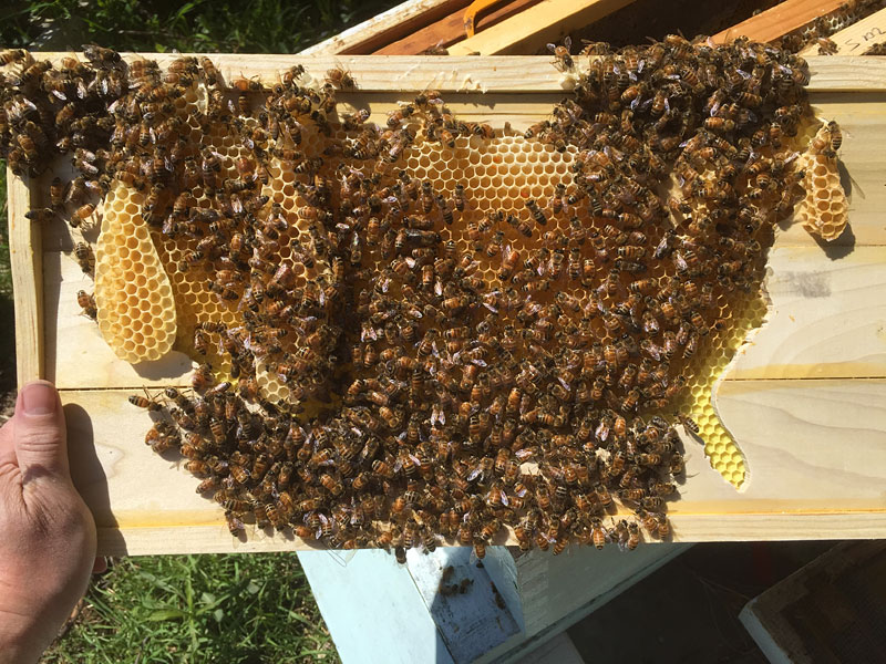 Pollination USA (2015)