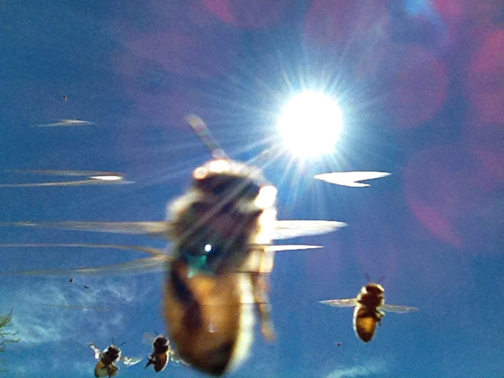 detail of   Sunny Honeybees    (2013)  archival inkjet print  edition of 15