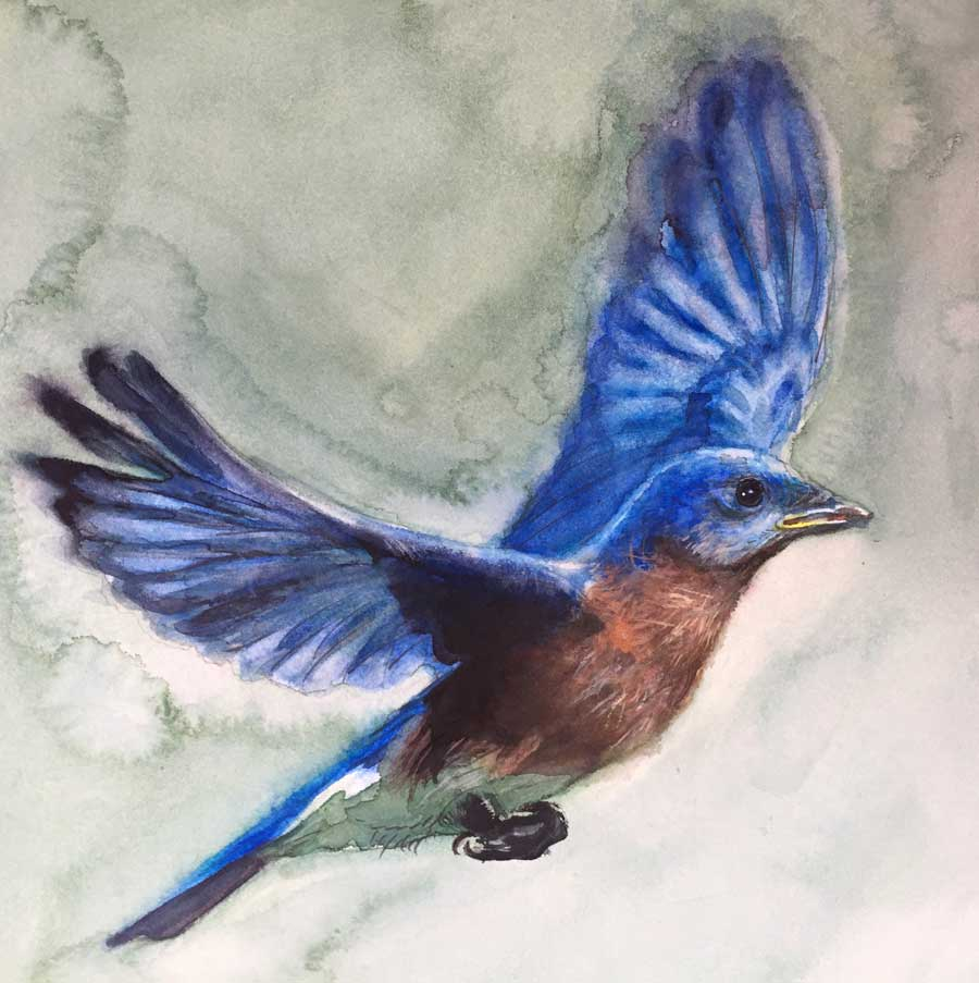 Bluebird from a work in progress, 2018. Watercolor and pencil on paper