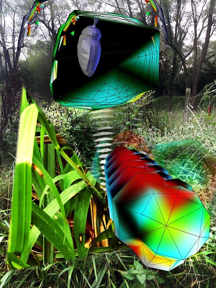 swallowtail-metamorphosis.jpg