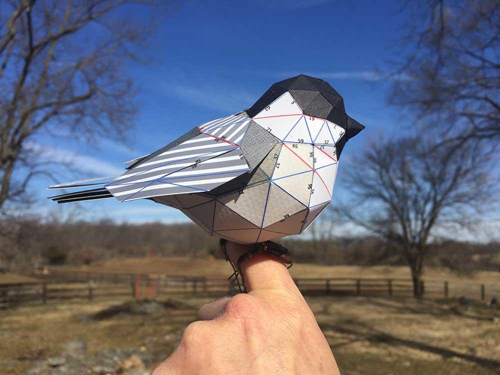 chickadee-4.jpg