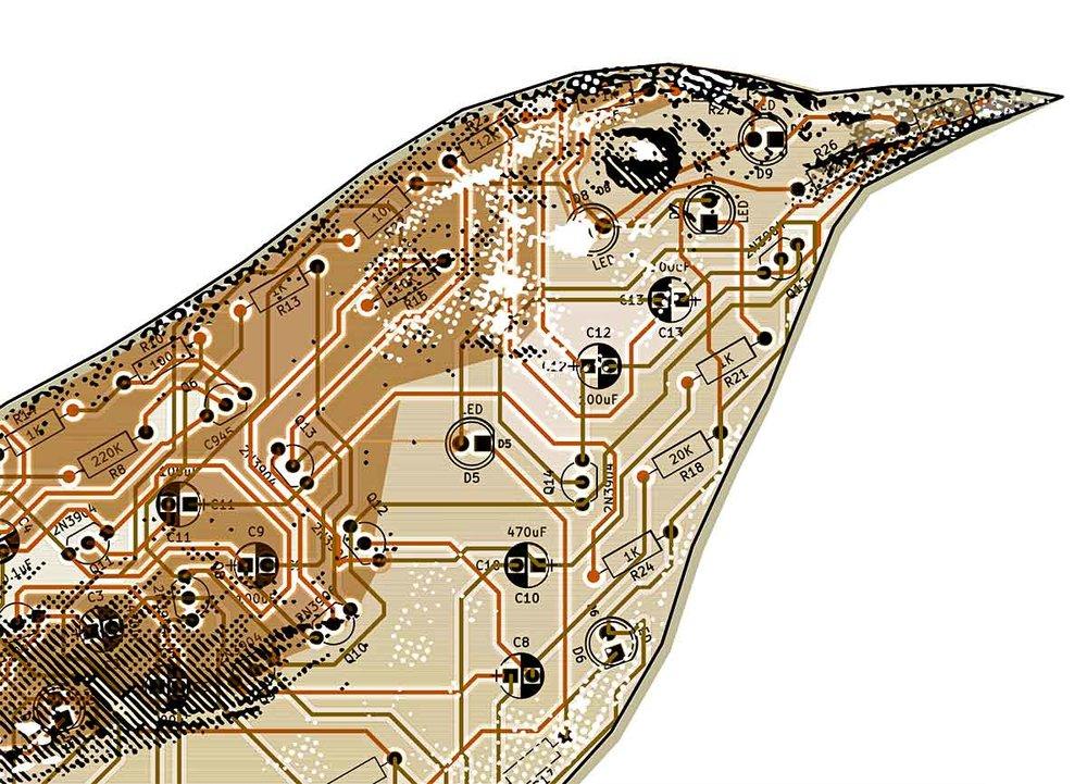 detail_wren_circuit.jpg