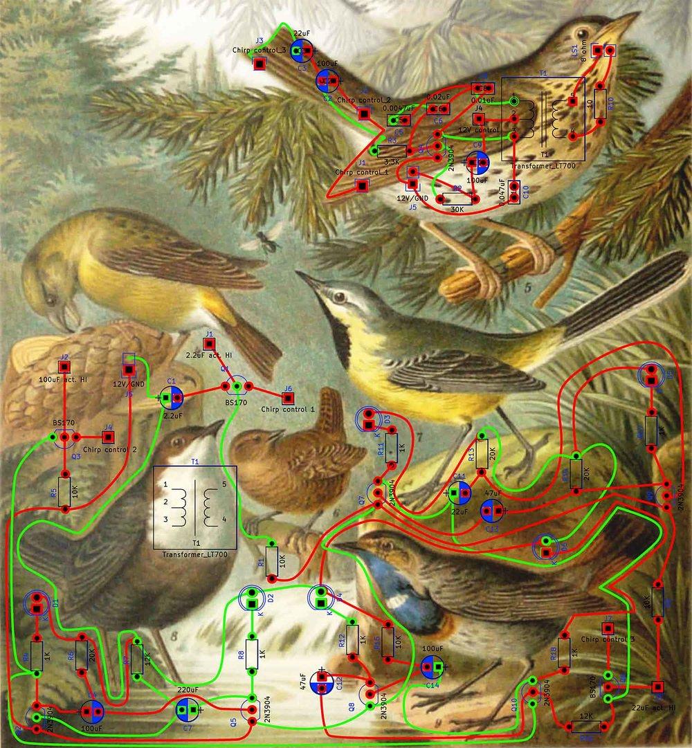det_circuit songbirds_KHeaton.jpg