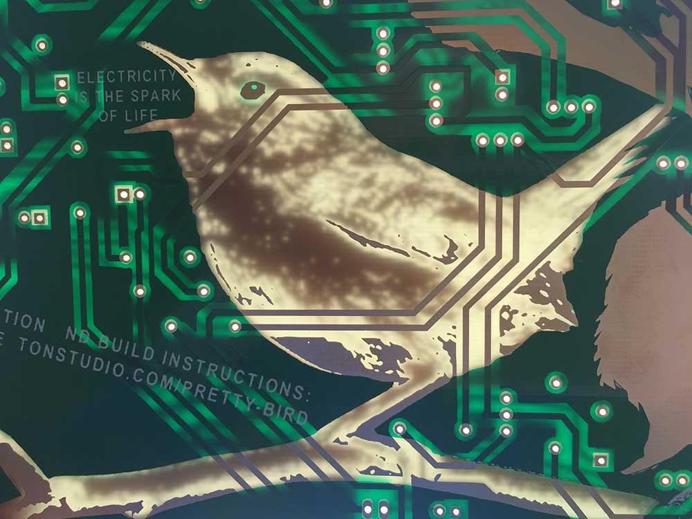 K_Heaton_Pretty-Bird_CC-2.jpg