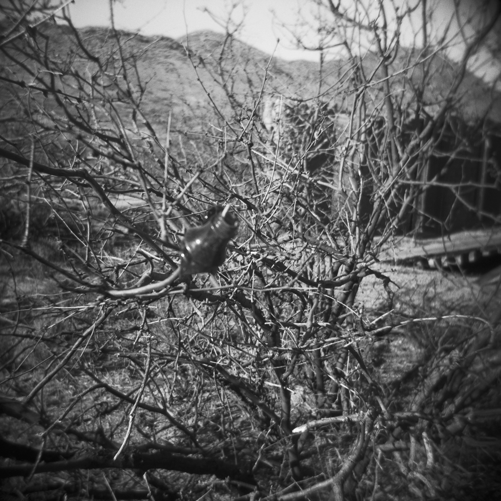 Steele-Arizona-Holga-19.jpg
