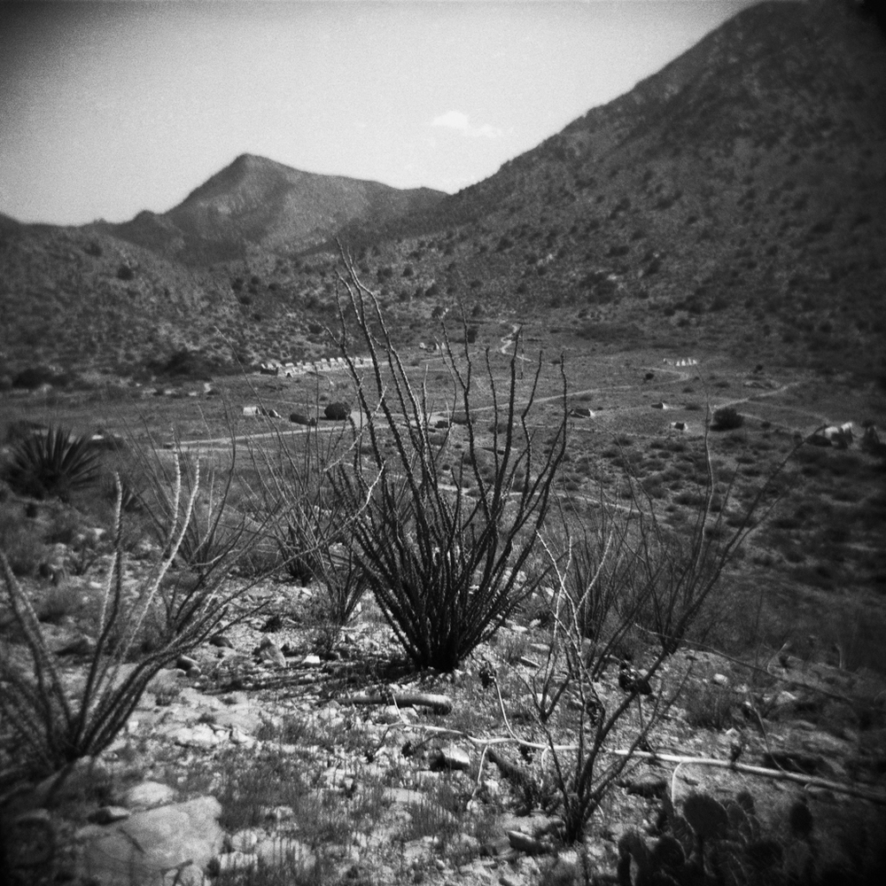 Ocotillo, Fort Bowie. 2005.