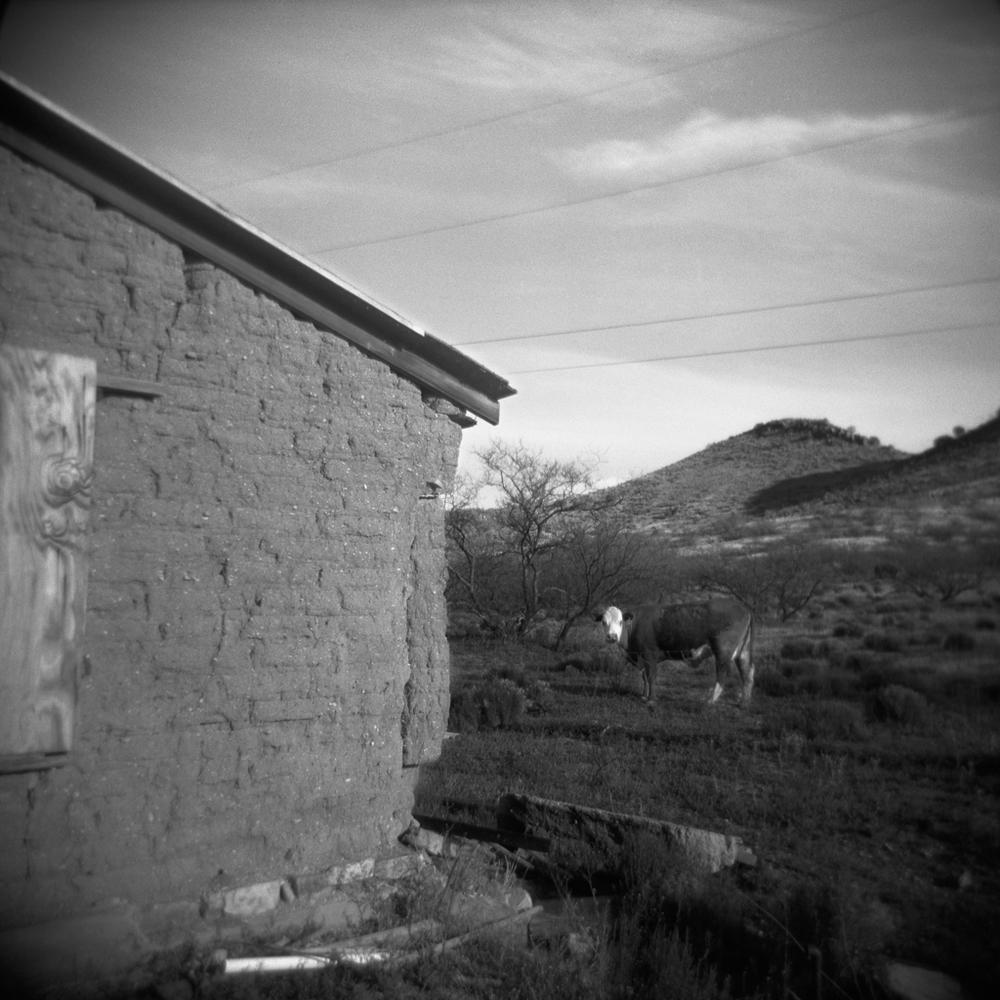 Cow, Dos Cabezas. 2005.
