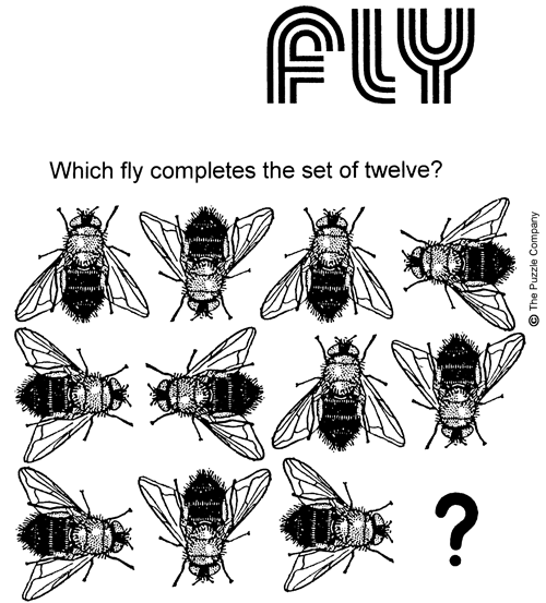 Fly Puzzle_KnightFeatures