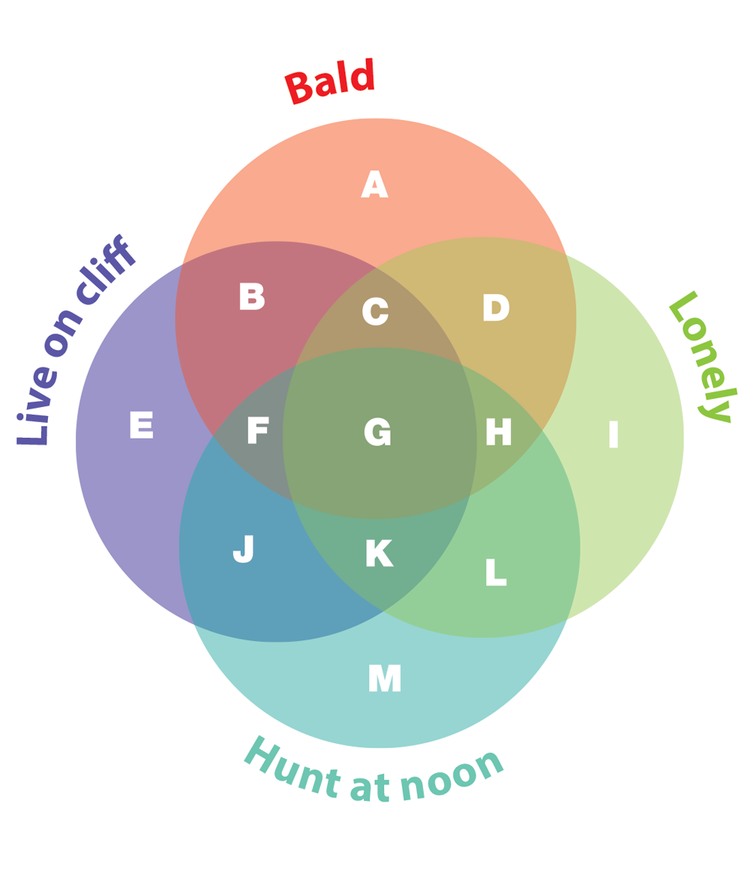 Venn diagram puzzles knight features content worth sharing can you work out which two areas of this diagram represent lonely bald eagles who live on clifftops and hunt at dawn and eagles who live on clifftops who ccuart Images