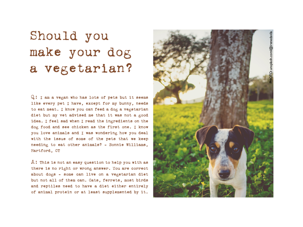 Dog veg.png
