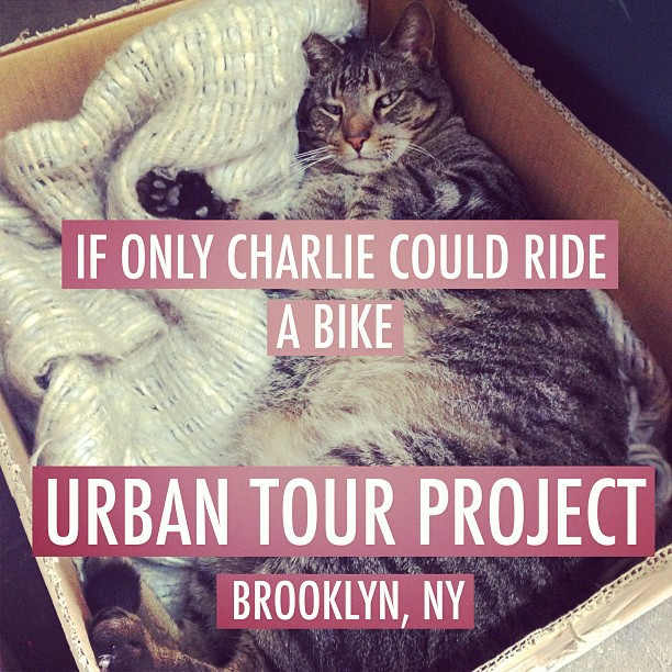 Swing by check out the bikes…. Pet the cat! #urbantourproject  (at the cat L.A.I.R.)