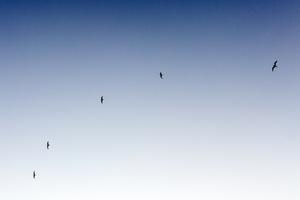 birds.jpeg