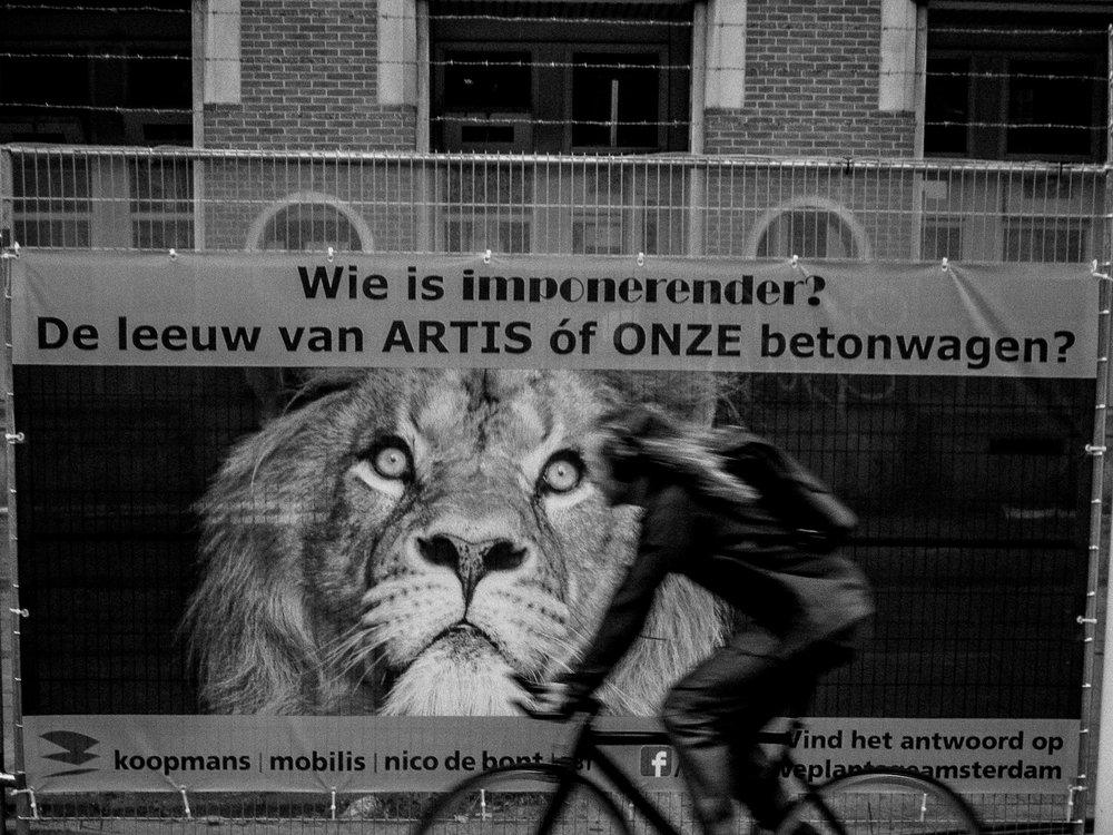 Michiel Witlox  Urban fauna #3