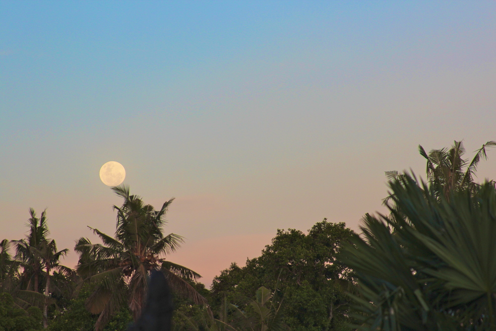 The Full Moon in Leo rising in Canggu, Bali