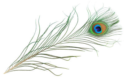 peacock_feather.jpg
