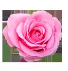 pinkrosebullet.png