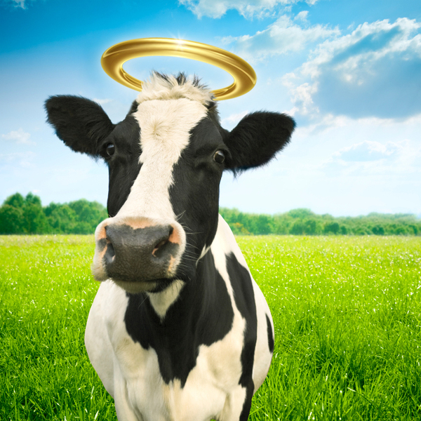 Image result for holy cow