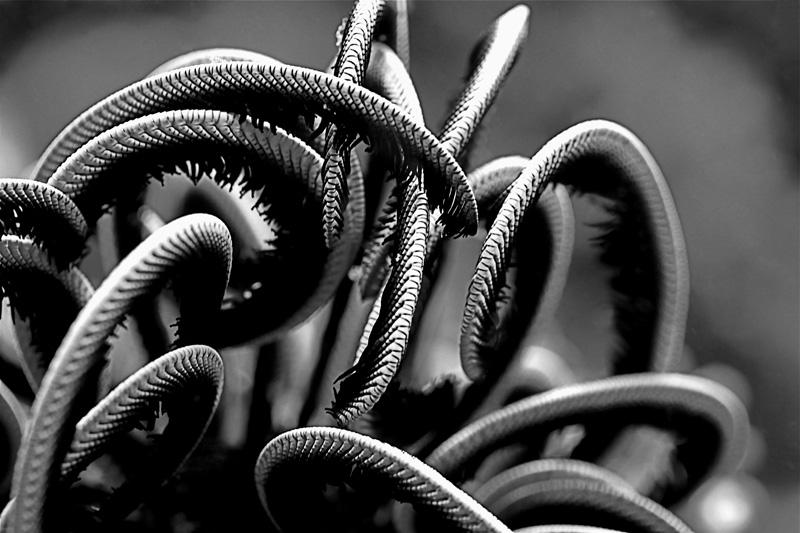 Ocean Velcro