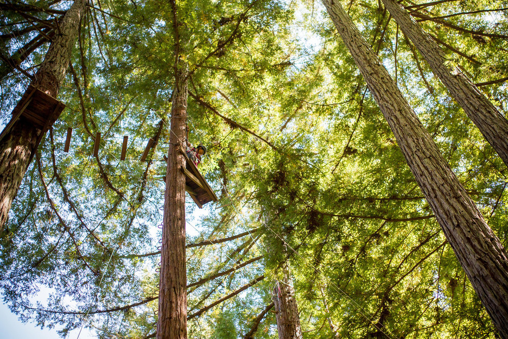 """It may be hard to tell from this picture, but the 8th grade boys climbed 65 feet up a tree, and then jump off the platform to catch a trapeze bar hanging about 5 feet away. No wonder this course was called """"Leap of Faith""""..."""