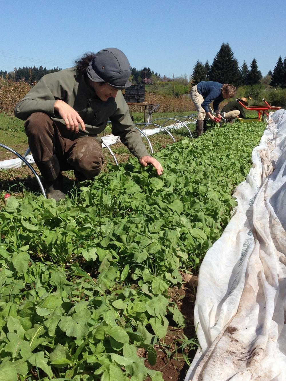 Our Table Farmer Photo.JPG