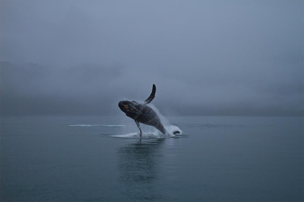 Matt Wild Whale2.jpg