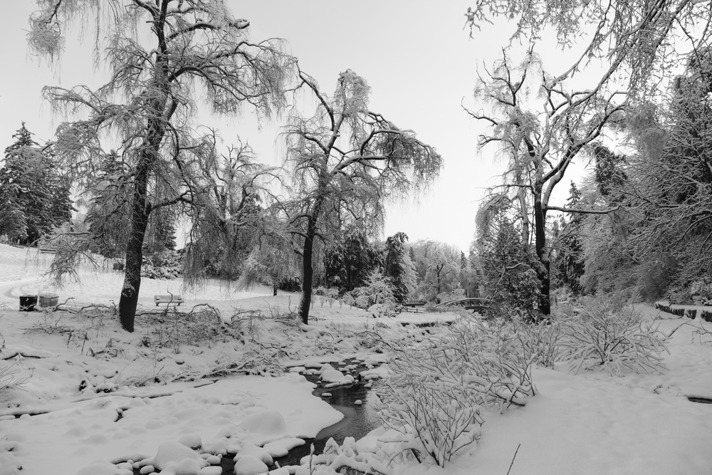 There's something beautiful about winter in black and white.