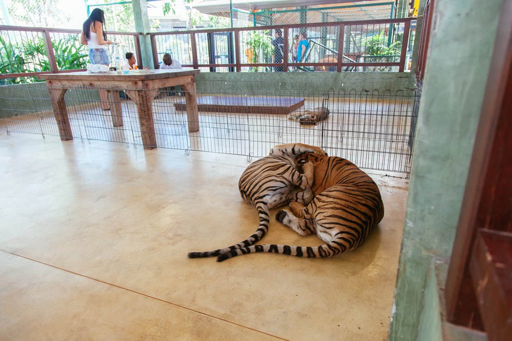 Thailand1-020.jpg