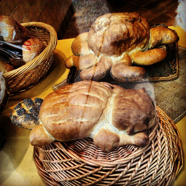 Beaver and octopus breads!