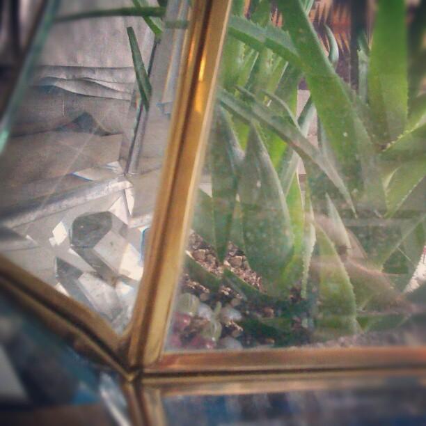 I swear DavidBowie lives in in #edwardjuan 's terrarium