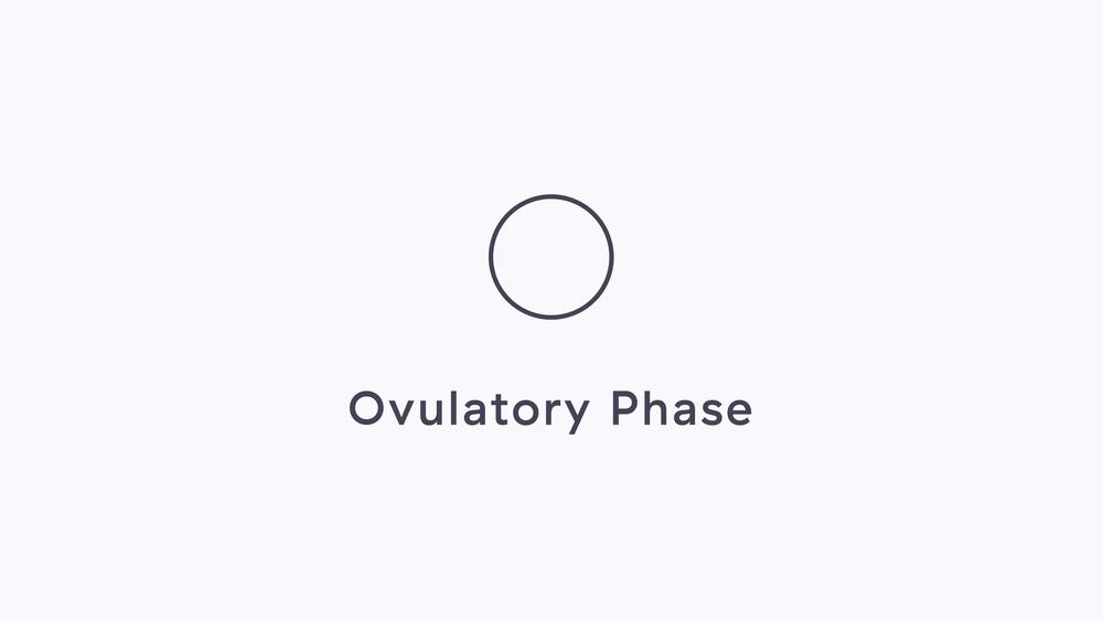 2-Ovulatory.png