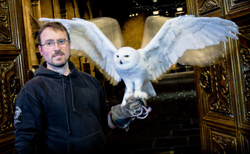 Snowy Owl @Warner Bros Studio Harry Potter