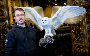 Snowy Owl @Warner Bros Studio Harry Potter