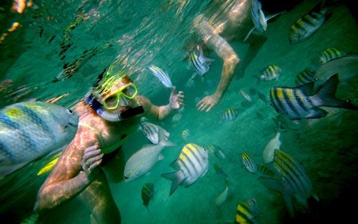 staniel-cay-snorkel.jpg