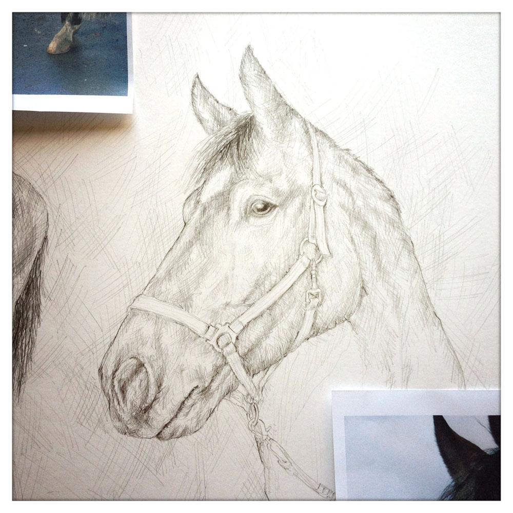 01_pferd-illu