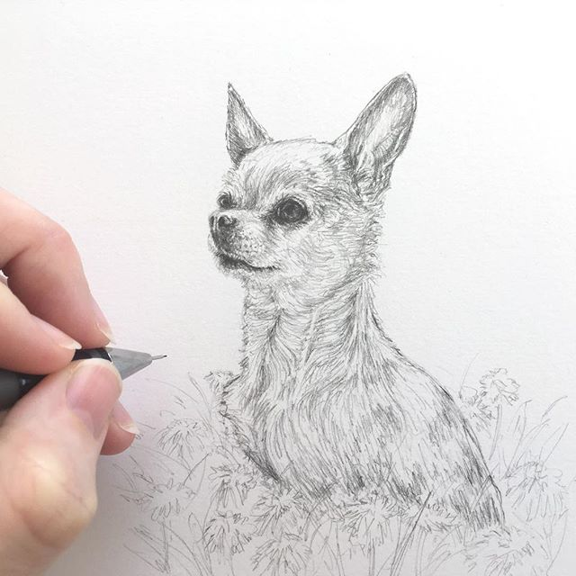 Her name? 'Tequilla Sunrise' of course! Who would have guessed otherwise ;) So cute the little Chihuahua. . . . @somniiq #chihuahua #somniiQ #dogsofinsta #dogsofinstagram #animallove #animallover #doglover #dogs #dog #custompetportrait #furryfriend #pencil #illustration #dogperson #petportrait #DrawYourVision #drawingpencil #animalsofinstagram #cuteanimals #chihuahuasofinstagram #TequillaSunrise