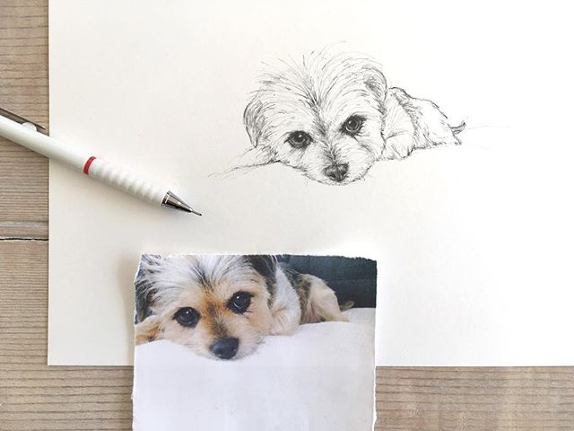 I love this photo I've been drawing from so much. It's so beautiful and detailed. . . . @designcrush #BebeCam #dogsofinsta #dogsofinstagram #animallove #animallover #doglover #dogs #dog #custompetportrait #furryfriend #pencil #illustration #dogperson #petportrait #DrawYourVision #drawingpencil #animalsofinstagram #cuteanimals