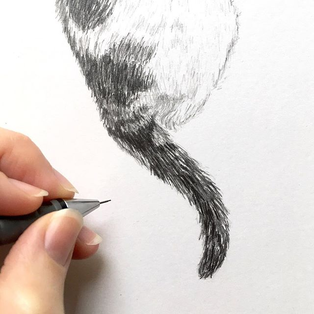 While I've been working on commissions that I'm not able to share just yet, I'd love to give you a sneak peak of a beautiful #cat I'm drawing right now. . . .  #calicocat #calicoville #calicocatsofig #catsofinstagram #catperson #catlover #cats #petportrait #handdrawn #pencil #ilovecats @rotringofficial #instacat #kitten #CatsOfIG #animalsofinstagram #cuteanimals #drawingpencil #tierportrait #bleistift #andenken #erinnerung #portrait #tierzeichnung #Zeichnung #Katzenportrait #geschenkidee #katze @susannahconway