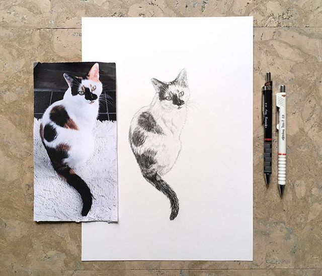 Often the illustrations I share are private commissions, but this cat I drew as gift for @susannahconway . I've been following her for a couple of years now and she's inspired me countless times by being incredibly kind, honest and authentic. Thank you for sharing your truth, Susannah! . . .  #calicocat #calicoville #calicocatsofig #catsofinstagram #catperson #catlover #cats #petportrait #handdrawn #pencil #ilovecats @rotringofficial #instacat #kitten #CatsOfIG #animalsofinstagram #cuteanimals #drawingpencil #tierportrait #bleistift #andenken #erinnerung #portrait #tierzeichnung #Zeichnung #Katzenportrait #geschenkidee #katze