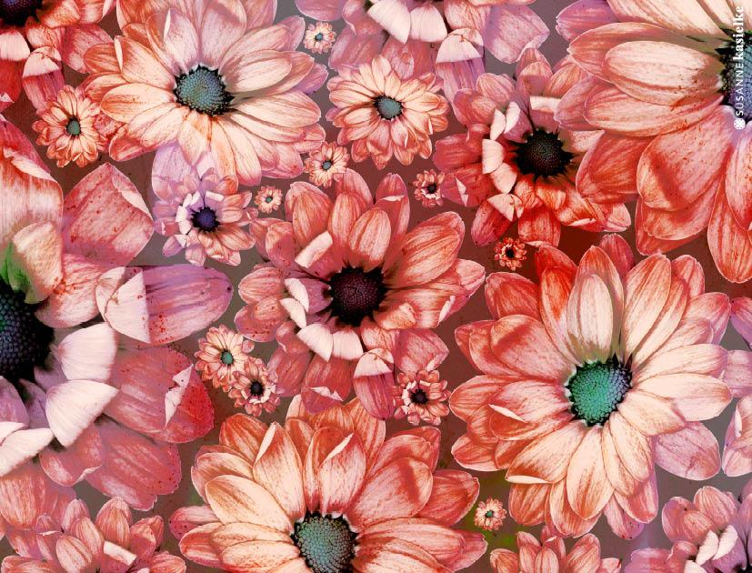 portfolio-ipad-21x16cm-01-floral0330.jpg