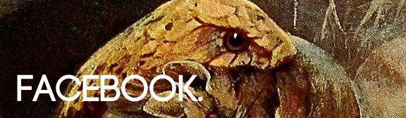 snake_fb.jpg