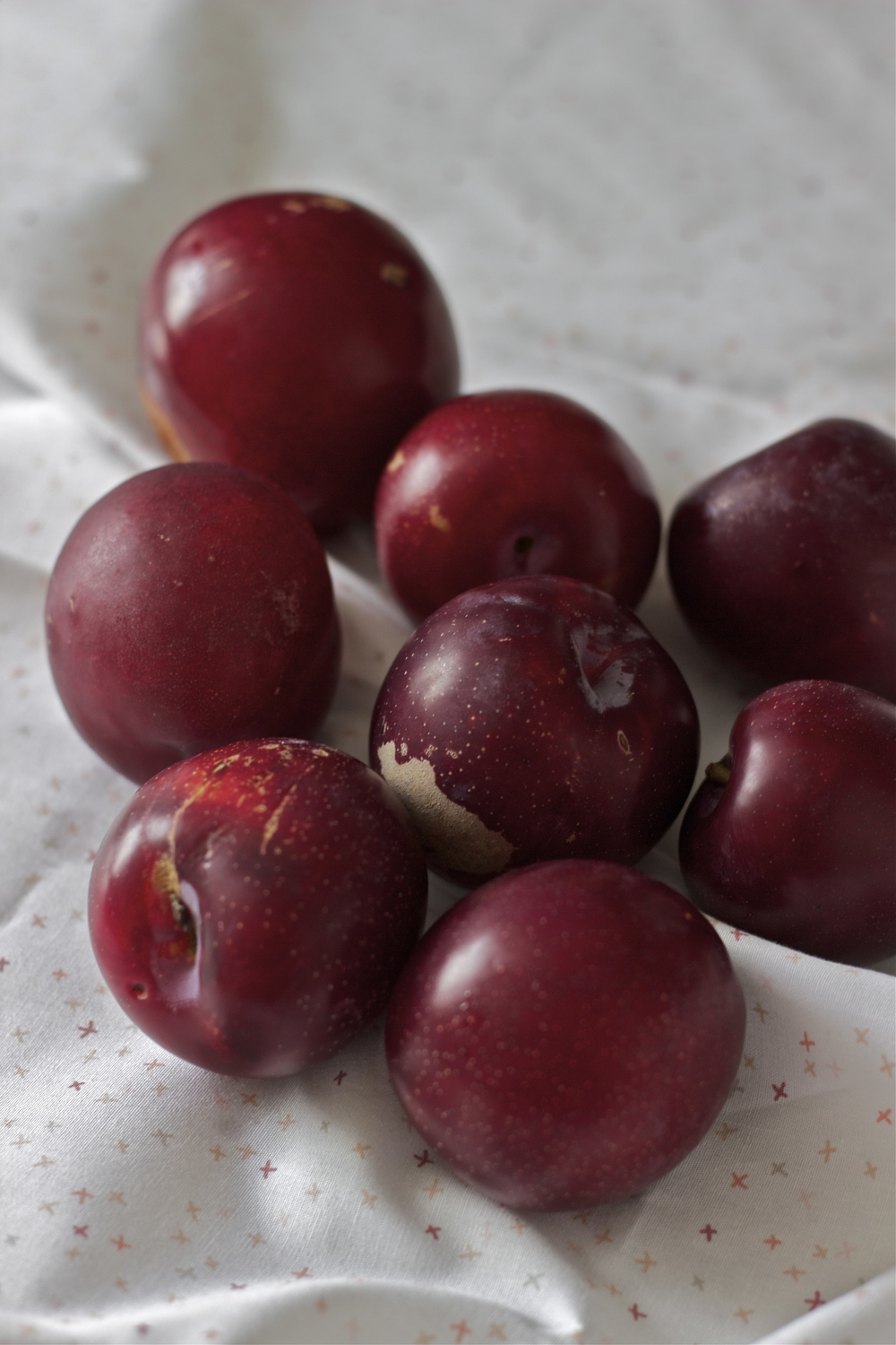 santa rosa red plums || half galley kitchen