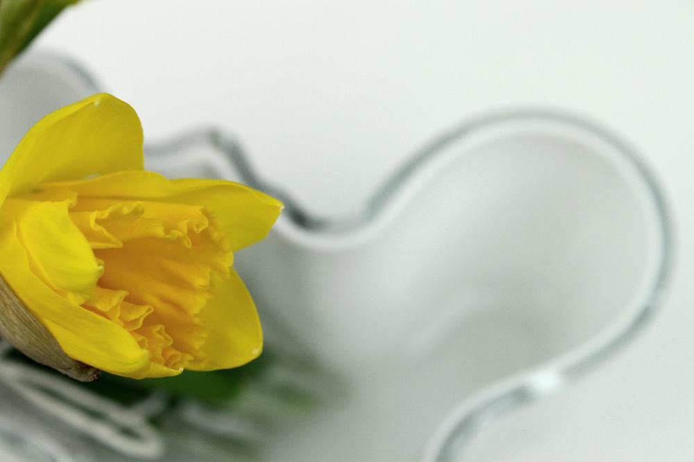 iittala aalto vase white daffodils spring flowers