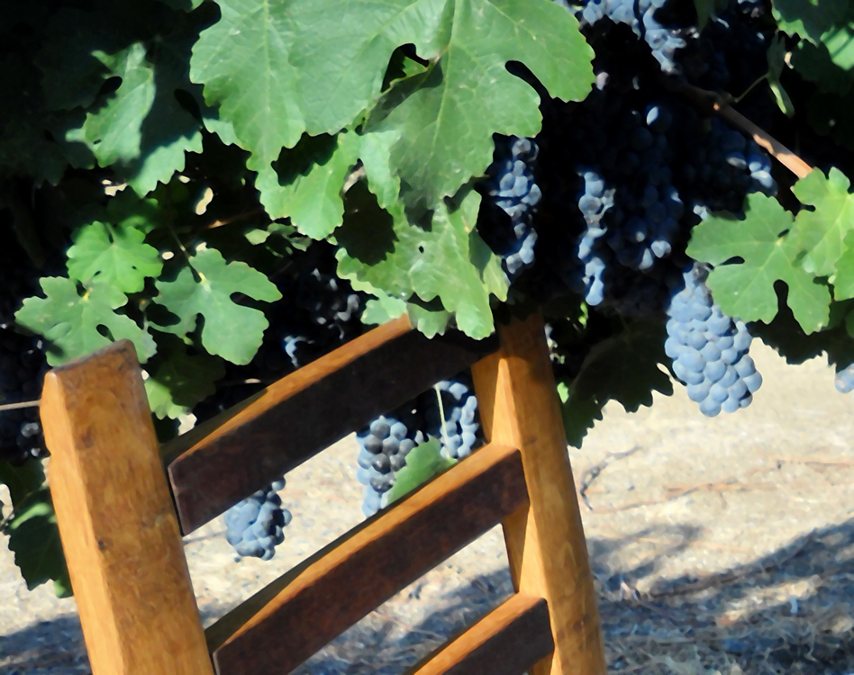 MZ3D dining chair in the vineyard