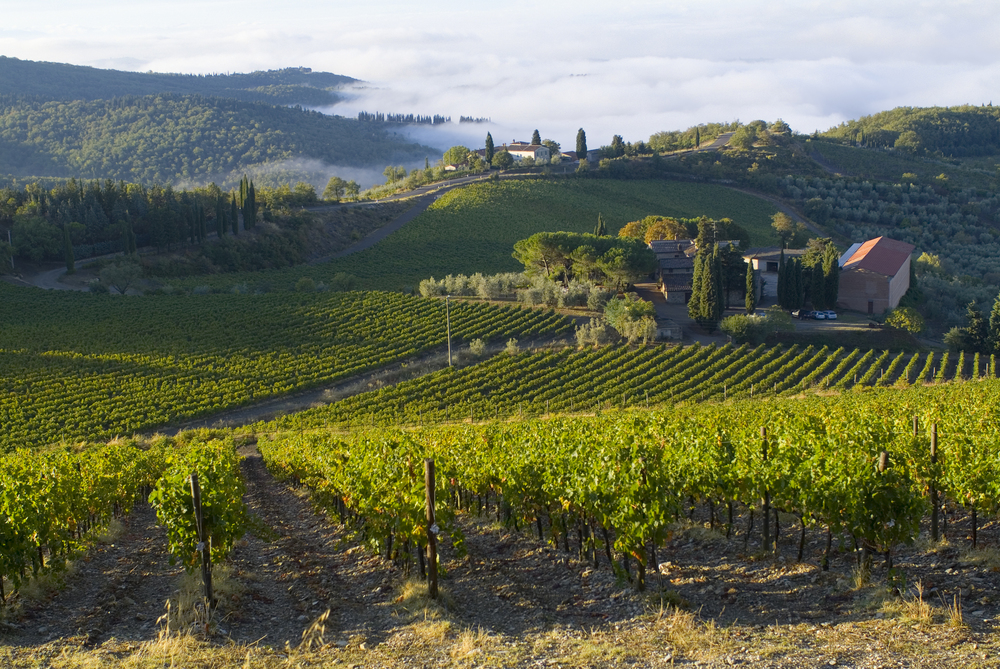Chianti Vineyard with fog.jpg