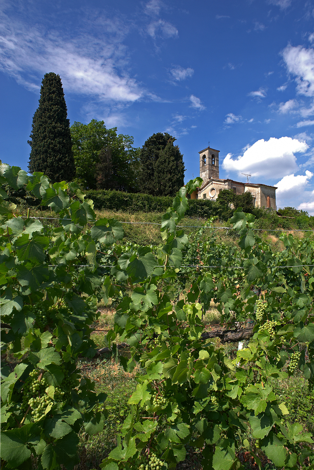 franciacorta church with vineyards.jpg